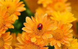 Flores amarelas, joaninha