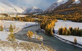 Árvores amarelas, rio, neve, inverno