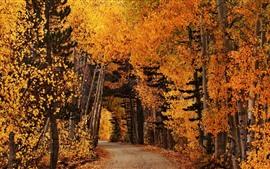 Осень, лес, тропинка, желтые листья