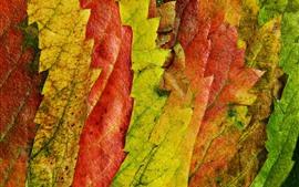 Aperçu fond d'écran Feuilles d'automne, vert, jaune, rouge