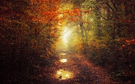 Autumn, path, trees, puddles, mist