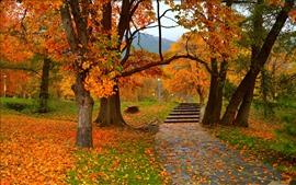 Outono, árvores, parque, caminho, lâmpadas