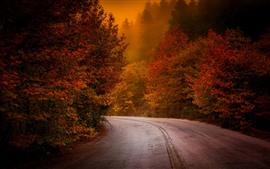 Automne, arbres, route, brouillard, matin