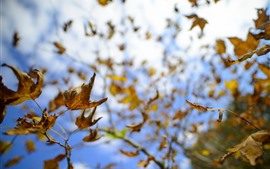 Autumn, twigs, leaves, sky, glare