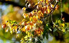Otoño, hojas amarillas, ramitas, sol.