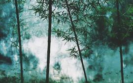 Floresta de bambu, belas paisagens
