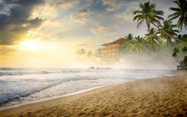Preview wallpaper Beach, sea, sand, palm trees, fog, morning