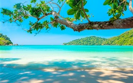 Preview wallpaper Beautiful sea, beach, tree, tropical
