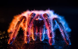 Preview wallpaper Beautiful spider, light, fluff