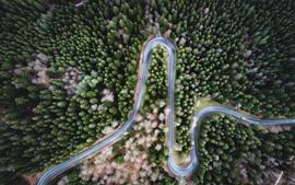 Curva, estrada, árvores, floresta, topo, vista