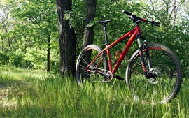 Bike, grass, forest
