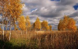 白樺、木々、草、秋