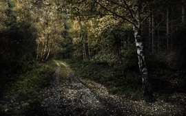 Preview wallpaper Birch, trees, path, darkness