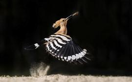 Vôo de pássaro, asas, pegar inseto