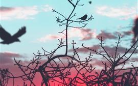 Aves, silueta, ramitas, puesta de sol