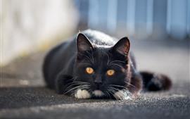 Черный кот, желтые глаза, вид спереди