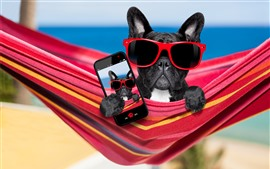 Preview wallpaper Black dog, sunglasses, phone, funny animal