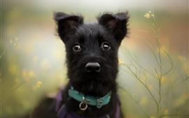 Черный щенок, туманный фон
