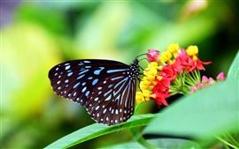 Black wings butterfly, flowers, green background