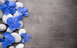 Flores azuis, pedras, spa