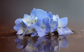 Preview wallpaper Blue hydrangea, flowers, water, reflection