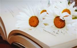 Livro, camomila branca