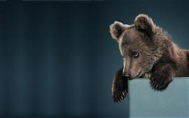 壁紙のプレビュー 茶色の熊、かわい子