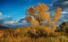 Кусты, деревья, желтые листья, осень, облака