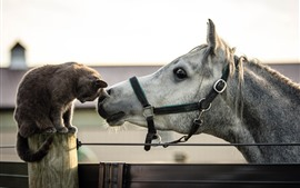 Preview wallpaper Cat and horse, friends