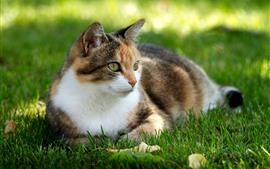 壁紙のプレビュー 猫の休息、芝生