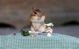 Preview wallpaper Chipmunk, peanut, flowers, breakfast, funny animal