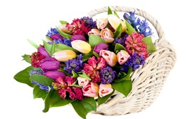 Colorful flowers, many kinds, basket, white background