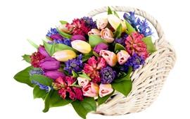 Красочные цветы, многие виды, корзина, белый фон