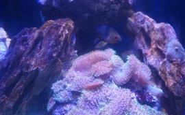 Коралл, рыба, скалы