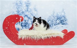 Preview wallpaper Cute cat, black and white, snow, New Year