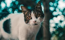 Vista frontal de gato bonito, árvore, desfocar o fundo