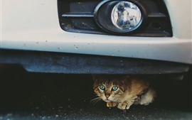 Cute cat under car