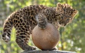 Lindo leopardo jugar una pelota