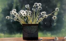 Dandelions, flores, vaso, buquê