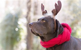 Preview wallpaper Dog, deer, scarf, funny animal