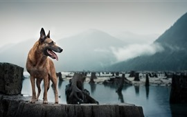 Собака смотрит на сторону, реку, пни