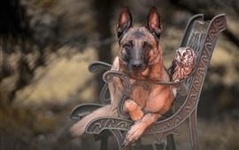 壁紙のプレビュー 犬、金属のベンチ、公園