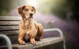 Собака сидит на скамейке, туманная