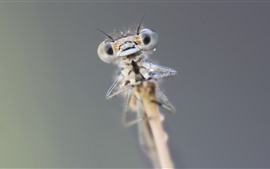 Preview wallpaper Dragonfly, eyes, water droplets