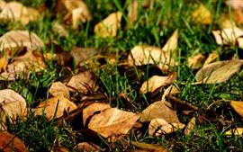 Hojas secas, hierba, tierra.