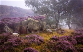 Preview wallpaper England, Derbyshire, Heather, Peak District, purple flowers, rocks, trees