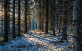 Preview wallpaper Finland, Savonlinna, forest, trees, snow, winter