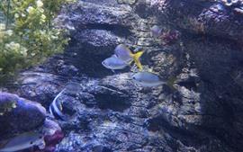 Peixe, água, subaquático