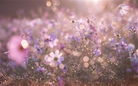Preview wallpaper Flowers, hazy, summer, glare