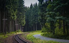 Floresta, árvores, ferrovia, linhas de energia